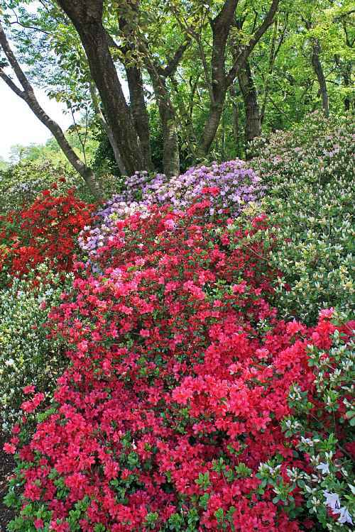 Ashikaga0923_y750.jpg