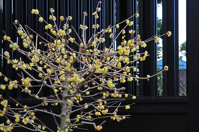Kamakura1106_x640.jpg