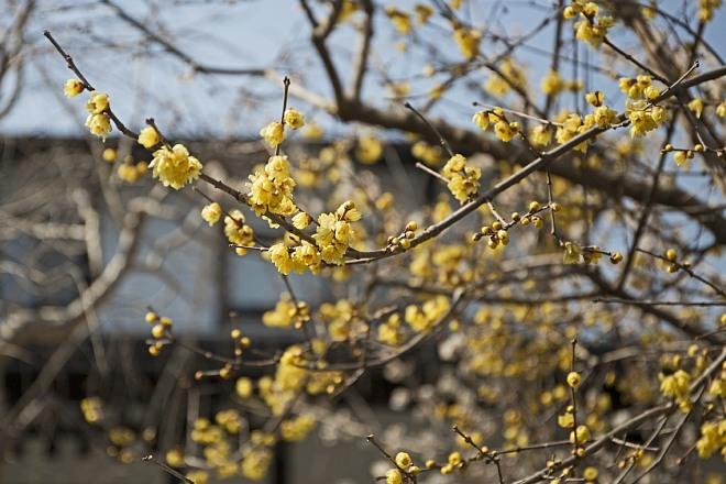Kamakura1410_x660.jpg