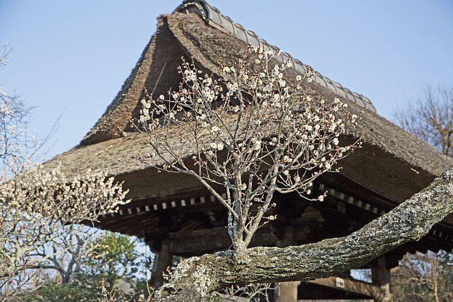 Kamakura1420_x660.jpg