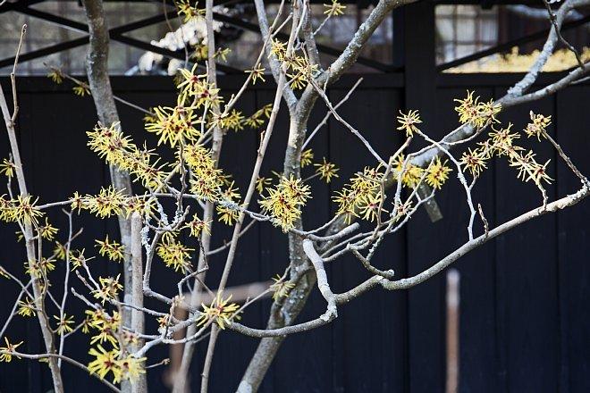 Kamakura1424_x660.jpg