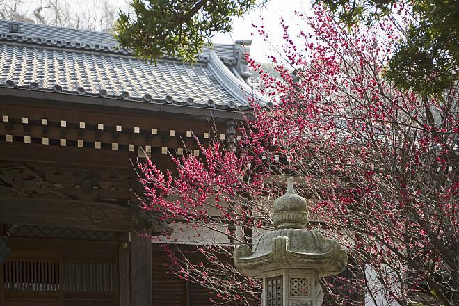 Kamakura1430_x660.jpg