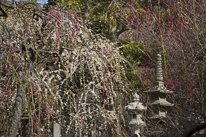 Kamakura1433_x660.jpg
