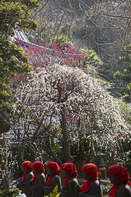 Kamakura1434_y8.jpg
