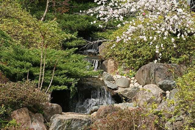 Sakura0819_x640.jpg