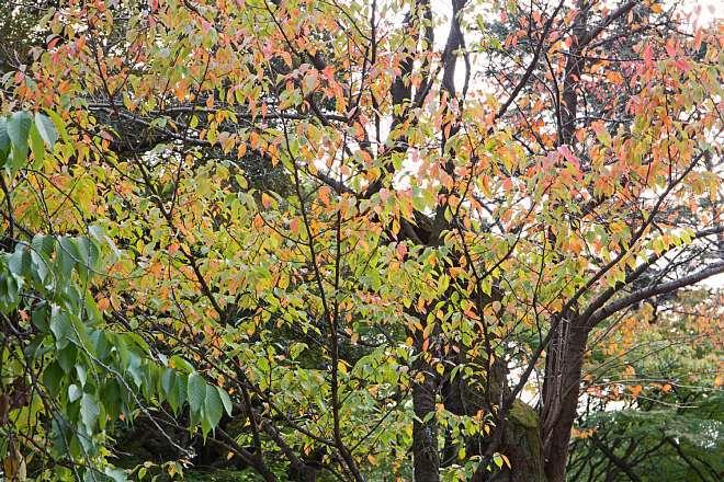 Yasukuni1415_x660.jpg