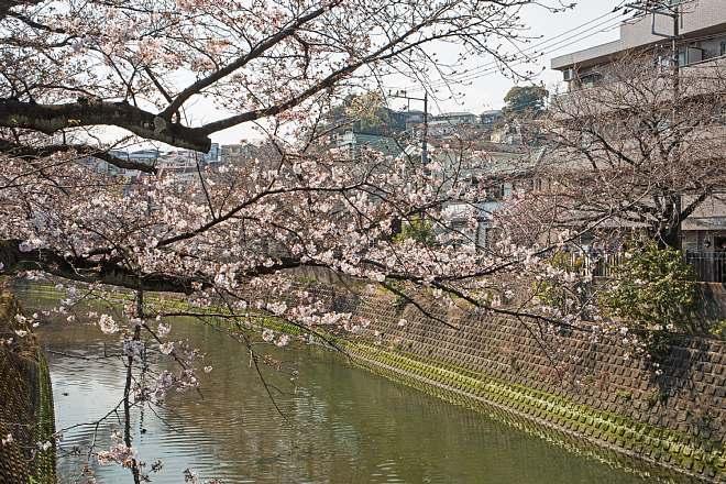 Yokohama1723_x660.jpg