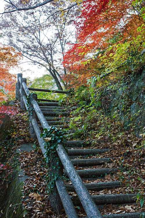 autumn1505_y8.jpg