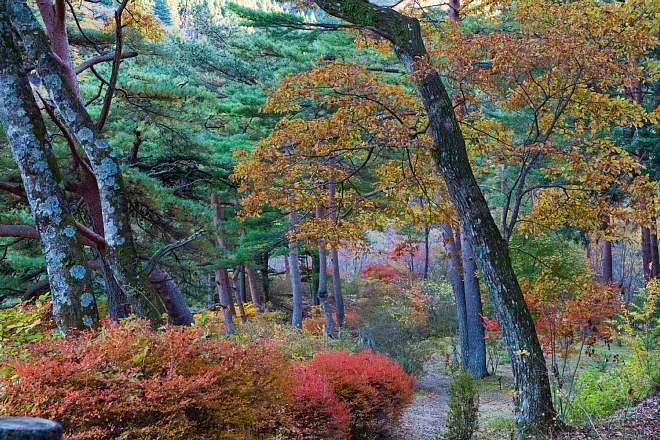 autumn1509_x660.jpg