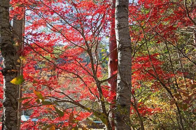 autumn1521_x660.jpg
