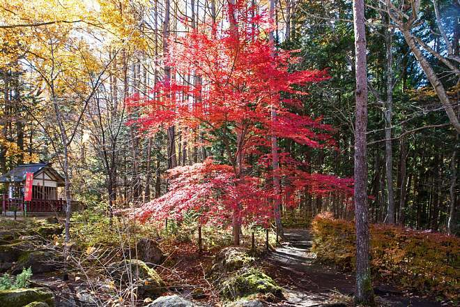 autumn1528_x660.jpg