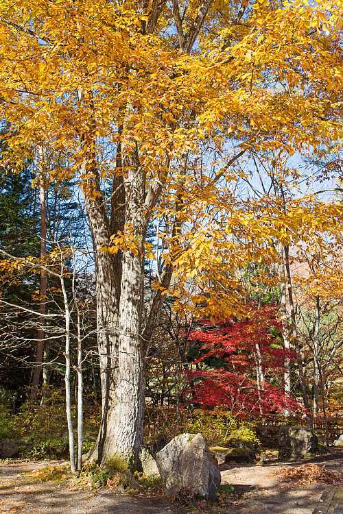 autumn1532_y8.jpg