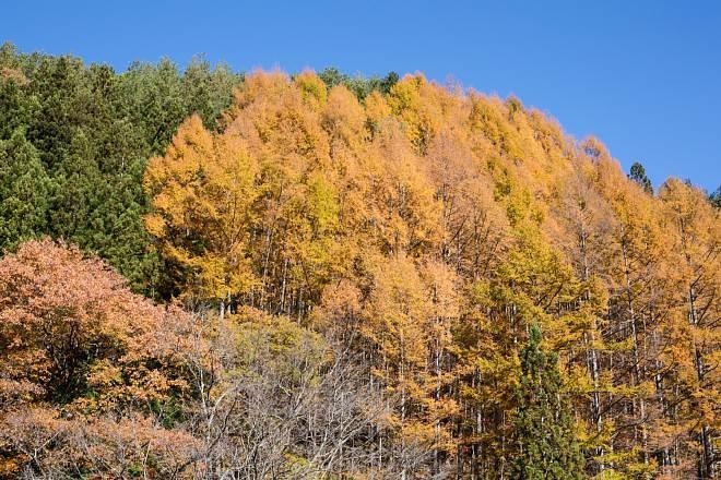 autumn1535_x660.jpg