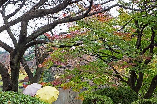 autumn15b01_x660.jpg