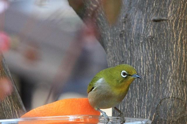 bird09a11_x640.jpg