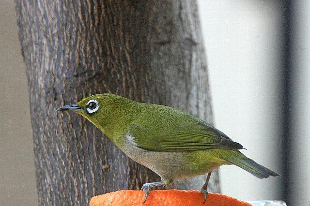 bird09a19_x640.jpg