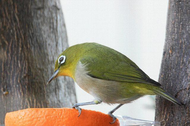 bird09a23_x640.jpg