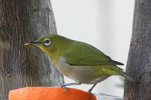 bird09a24_x640.jpg