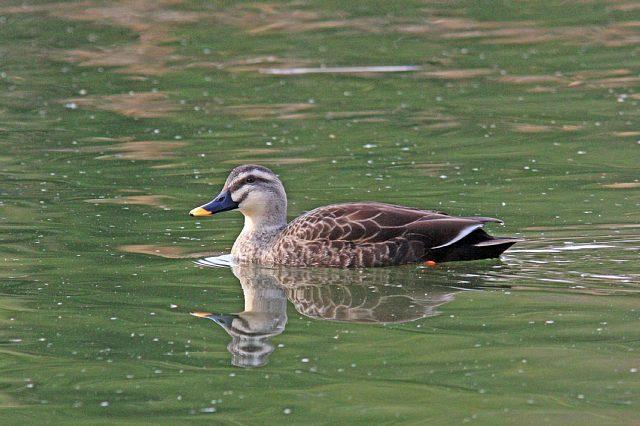 bird10a04_x640.jpg
