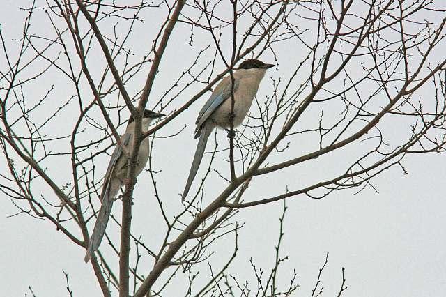 bird10a21_x640.jpg