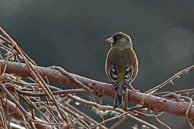 bird10a26_x640.jpg