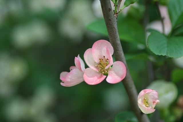 flower08a16_x640.jpg