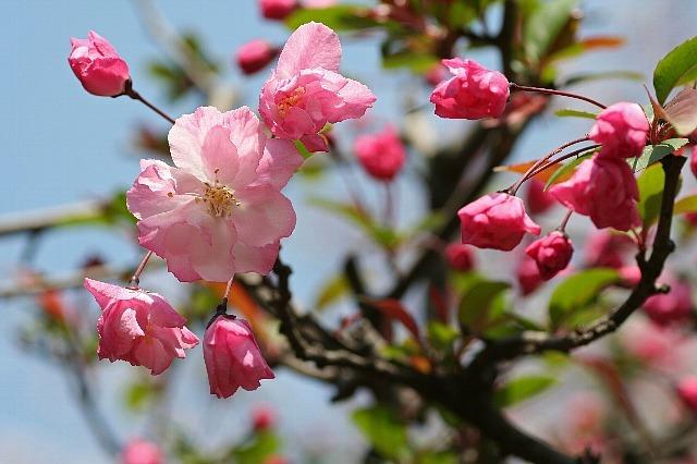 flower08a19_x640.jpg