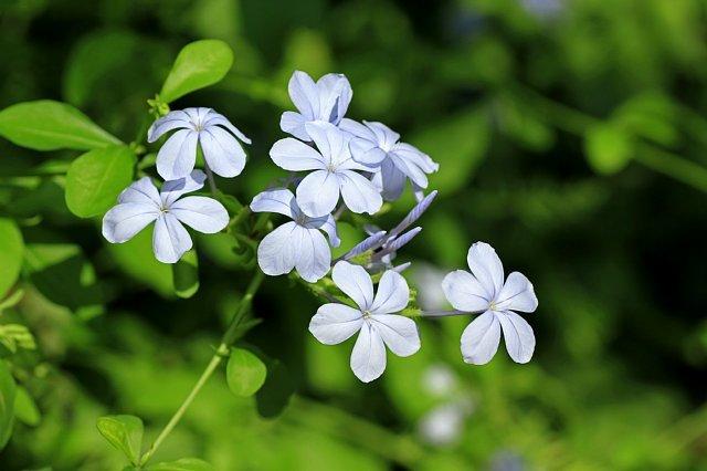 flowerpark1011_x640.jpg