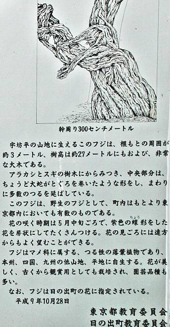 fuji08002_y660.jpg