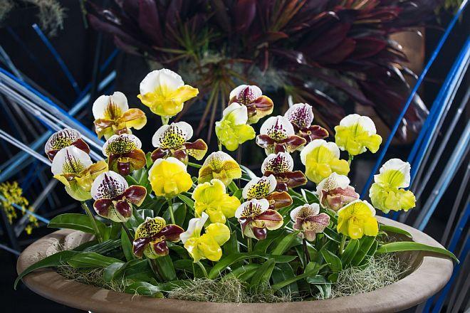 orchid1812 _x660.jpg
