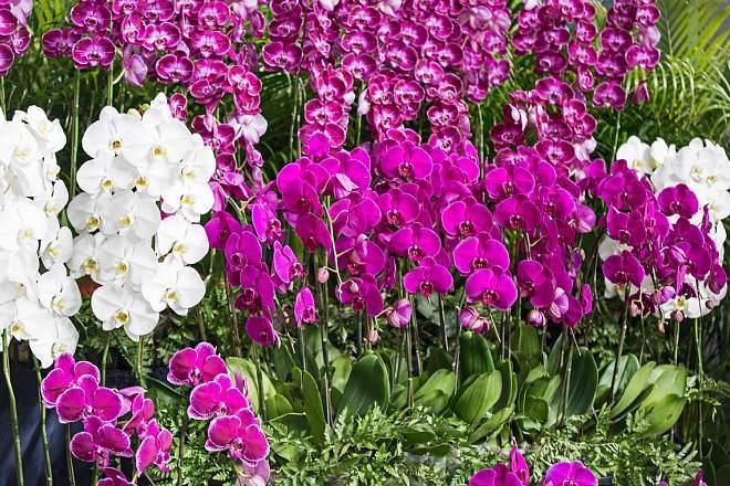 orchid1817_x660.jpg