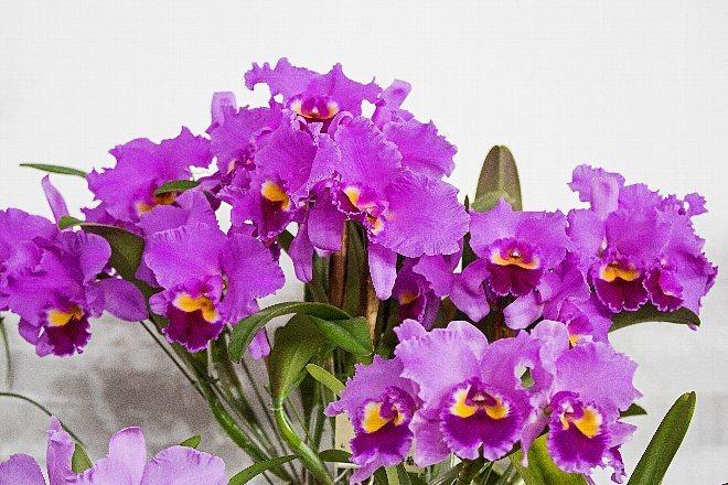 orchid1821_x660.jpg
