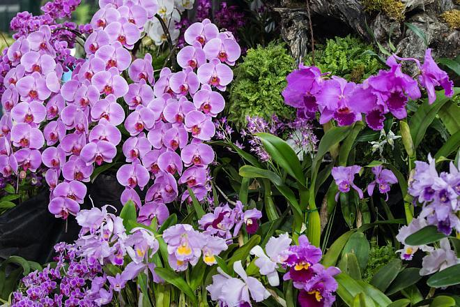 orchid1826_x660.jpg