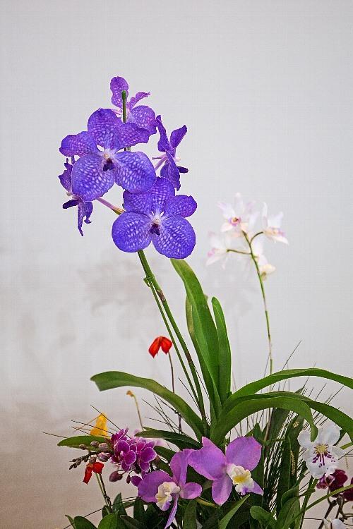 orchid1846_y8.jpg
