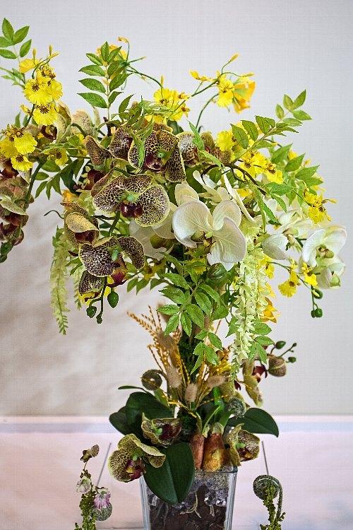 orchid1847_y8.jpg