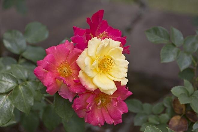 rose1440_x660.jpg