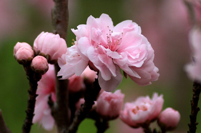 spring1205a_x660.jpg