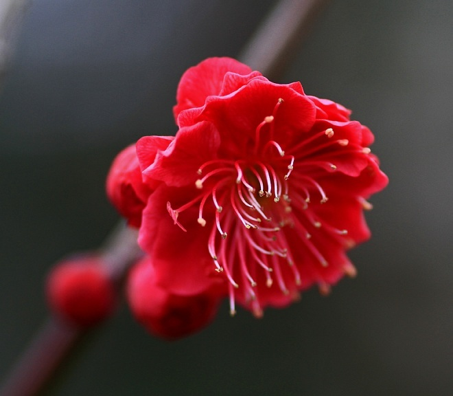 spring1209_x660.jpg