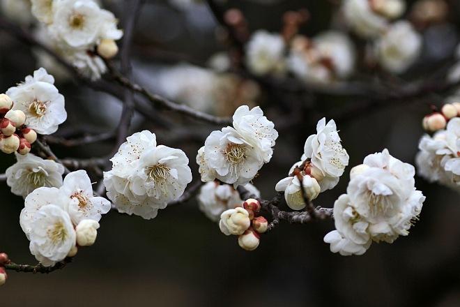 spring1210_x660.jpg