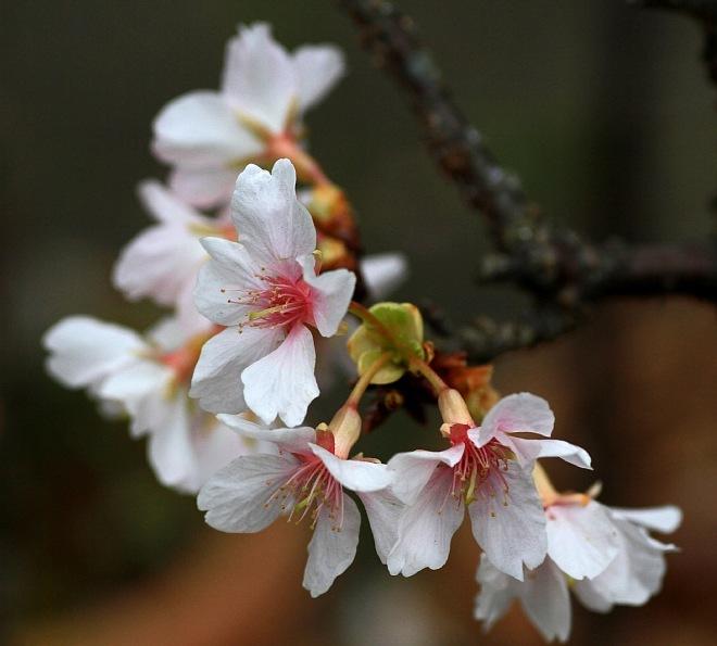 spring1212_x660.jpg