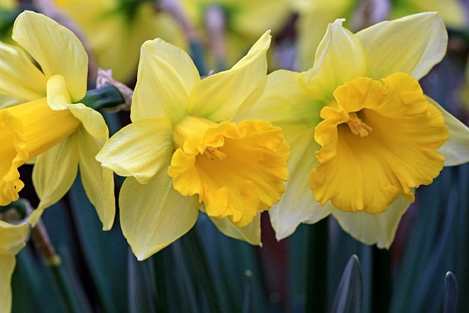 spring1232_x660.jpg