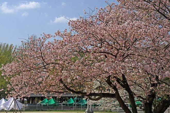 spring13b02_x660.jpg