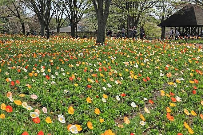 spring13b23_x660.jpg