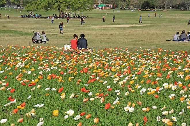 spring13b29_x660.jpg
