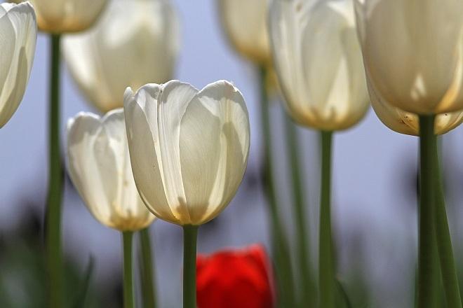 spring13b38_x660.jpg