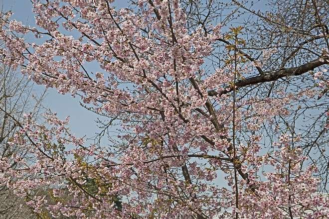 spring1406_x660.jpg