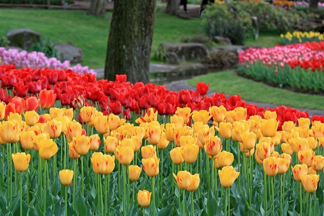 tulip1006_x640.jpg