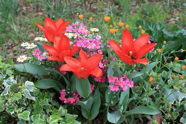 tulip1034_x640.jpg