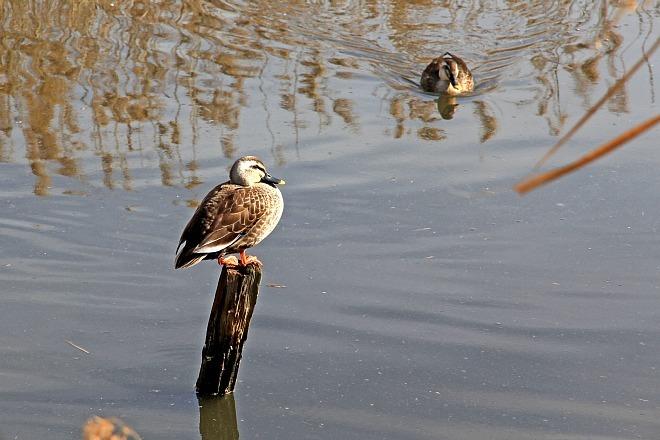 waterbird1204_x660.jpg