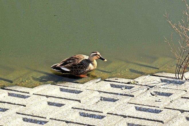waterbird1206_x660.jpg